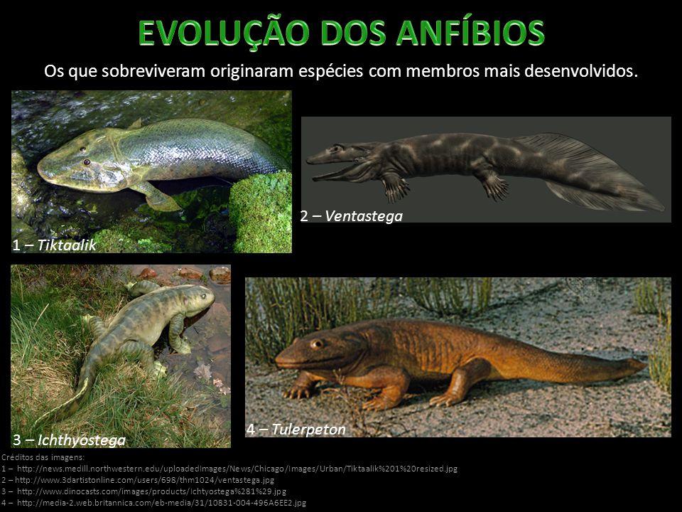 Os que sobreviveram originaram espécies com membros mais desenvolvidos. Créditos das imagens: 1 – http://news.medill.northwestern.edu/uploadedImages/N