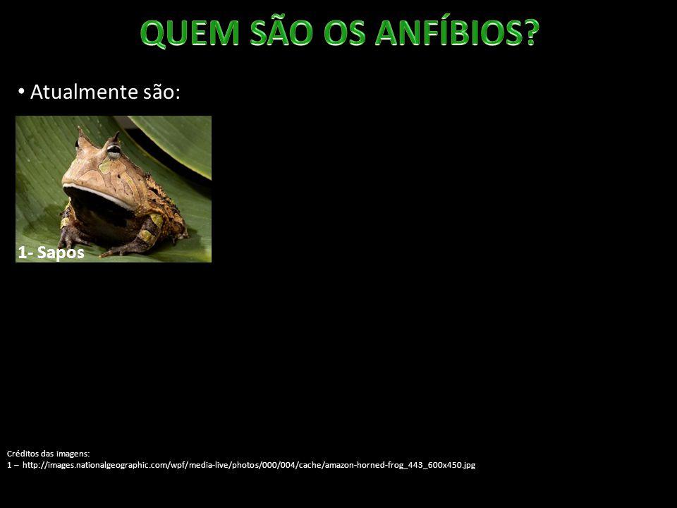 Atualmente são: 1- Sapos Créditos das imagens: 1 – http://images.nationalgeographic.com/wpf/media-live/photos/000/004/cache/amazon-horned-frog_443_600x450.jpg 2 – http://www.fcps.edu/islandcreekes/ecology/Amphibians/Bullfrog/bull2.jpg 2- Rãs