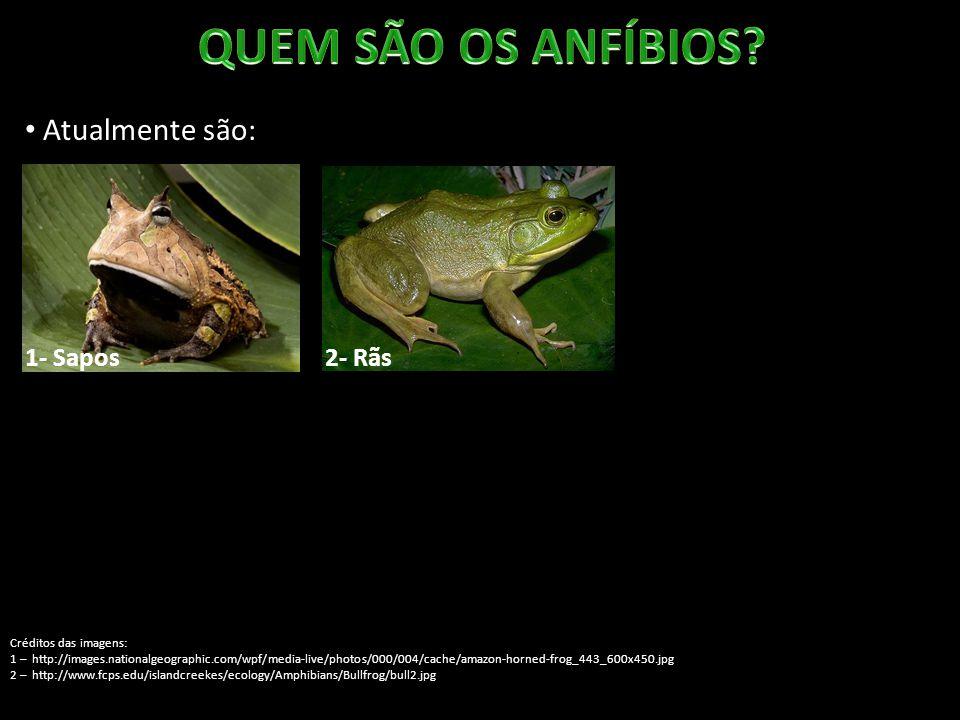 Atualmente são: 1- Sapos Créditos das imagens: 1 – http://images.nationalgeographic.com/wpf/media-live/photos/000/004/cache/amazon-horned-frog_443_600x450.jpg 2 – http://www.fcps.edu/islandcreekes/ecology/Amphibians/Bullfrog/bull2.jpg 3 – http://www.materiaincognita.com.br/wp-content/uploads/2012/06/Perereca-Ninja.jpg 2- Rãs 3- Pererecas