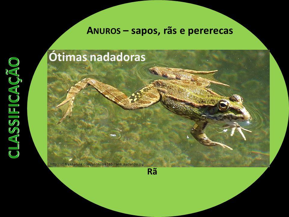 A NUROS – sapos, rãs e pererecas Rã Ótimas nadadoras http://i1.treknature.com/photos/4365/rana_nadando.jpg