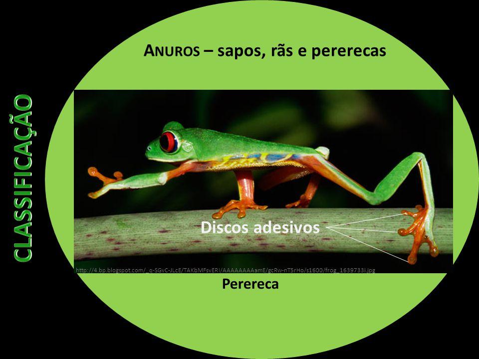 A NUROS – sapos, rãs e pererecas Perereca Discos adesivos http://4.bp.blogspot.com/_q-SGvC-JLcE/TAKbMFsvERI/AAAAAAAAamE/gcRw-nT5rHo/s1600/frog_1639733