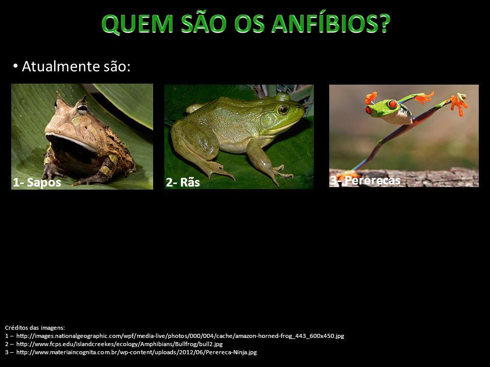 Atualmente são: 1- Sapos Créditos das imagens: 1 – http://images.nationalgeographic.com/wpf/media-live/photos/000/004/cache/amazon-horned-frog_443_600x450.jpg 2 – http://www.fcps.edu/islandcreekes/ecology/Amphibians/Bullfrog/bull2.jpg 3 – http://www.materiaincognita.com.br/wp-content/uploads/2012/06/Perereca-Ninja.jpg 2- Rãs 3- Pererecas 4- Salamandras