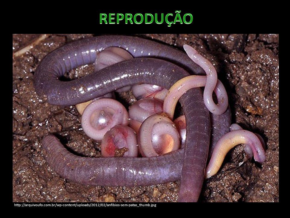http://arquivoufo.com.br/wp-content/uploads/2012/02/anfibios-sem-patas_thumb.jpg