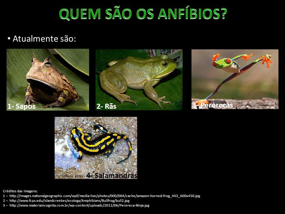 Atualmente são: 1- Sapos Créditos das imagens: 1 – http://images.nationalgeographic.com/wpf/media-live/photos/000/004/cache/amazon-horned-frog_443_600x450.jpg 2 – http://www.fcps.edu/islandcreekes/ecology/Amphibians/Bullfrog/bull2.jpg 3 – http://www.materiaincognita.com.br/wp-content/uploads/2012/06/Perereca-Ninja.jpg 5 – http://www.daviddarling.info/images/caecilian.jpg 2- Rãs 3- Pererecas 4- Salamandras5 - Cecílias