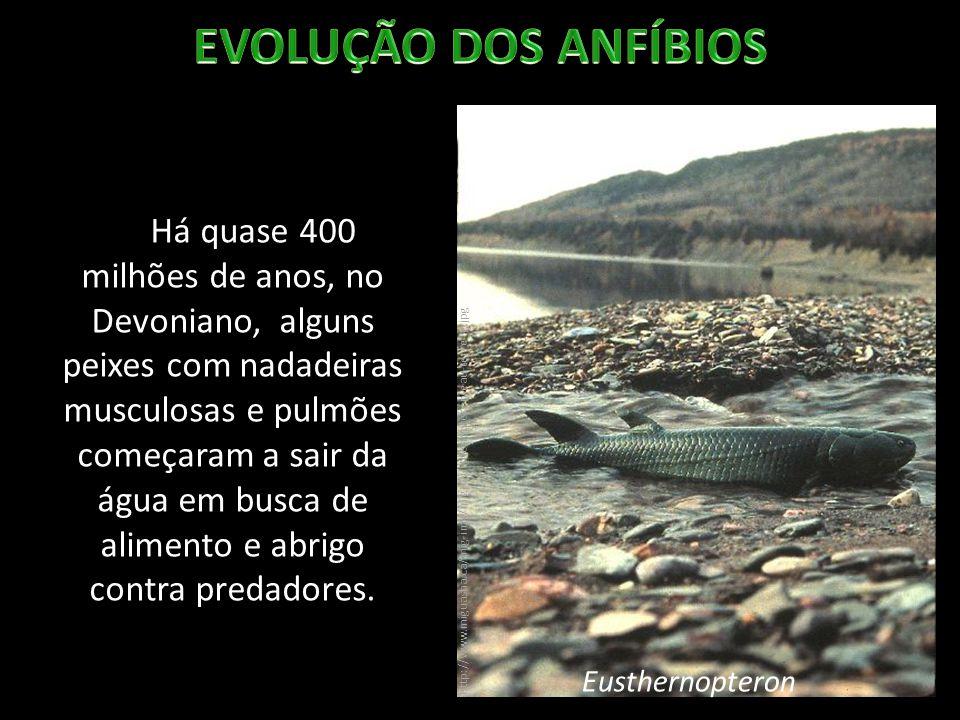 Há quase 400 milhões de anos, no Devoniano, alguns peixes com nadadeiras musculosas e pulmões começaram a sair da água em busca de alimento e abrigo c