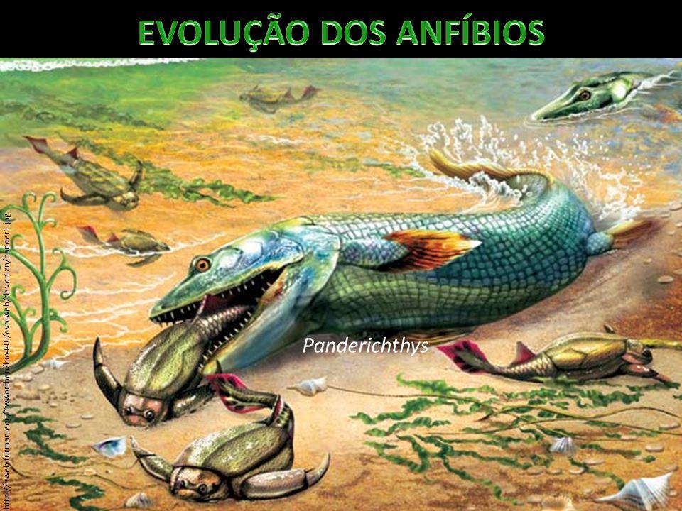 Os que sobreviveram originaram espécies com membros mais desenvolvidos.