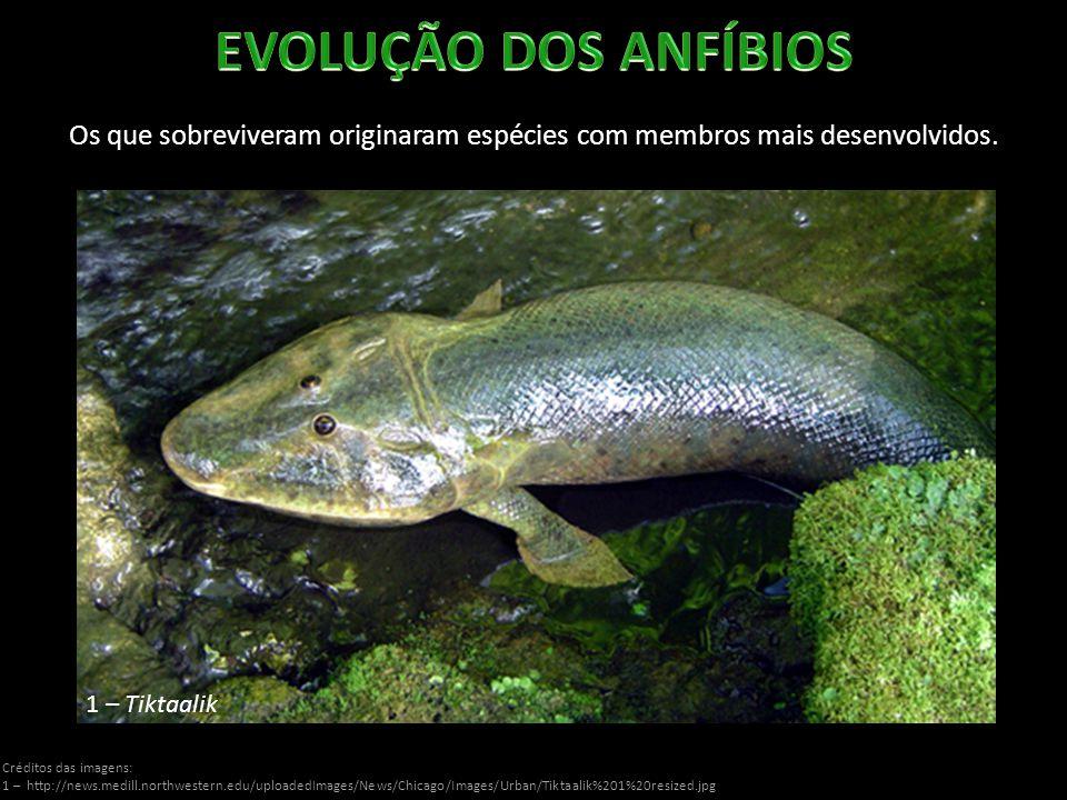 http://www2.ibb.unesp.br/Museu_Escola/Ensino_Fundamental/Origami/Imagens/anfibios/Anfibio.jpg