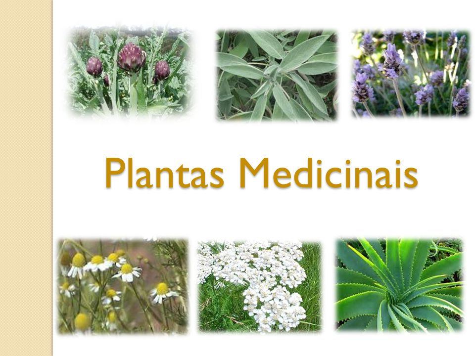 Manjerona Propriedades medicinais: Expectorante e digestivo, relaxante Indicações: Reumatismo, artrite.