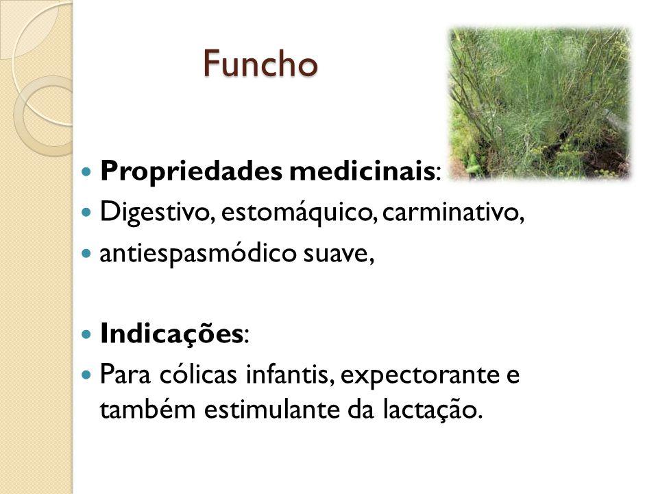 Funcho Propriedades medicinais: Digestivo, estomáquico, carminativo, antiespasmódico suave, Indicações: Para cólicas infantis, expectorante e também estimulante da lactação.