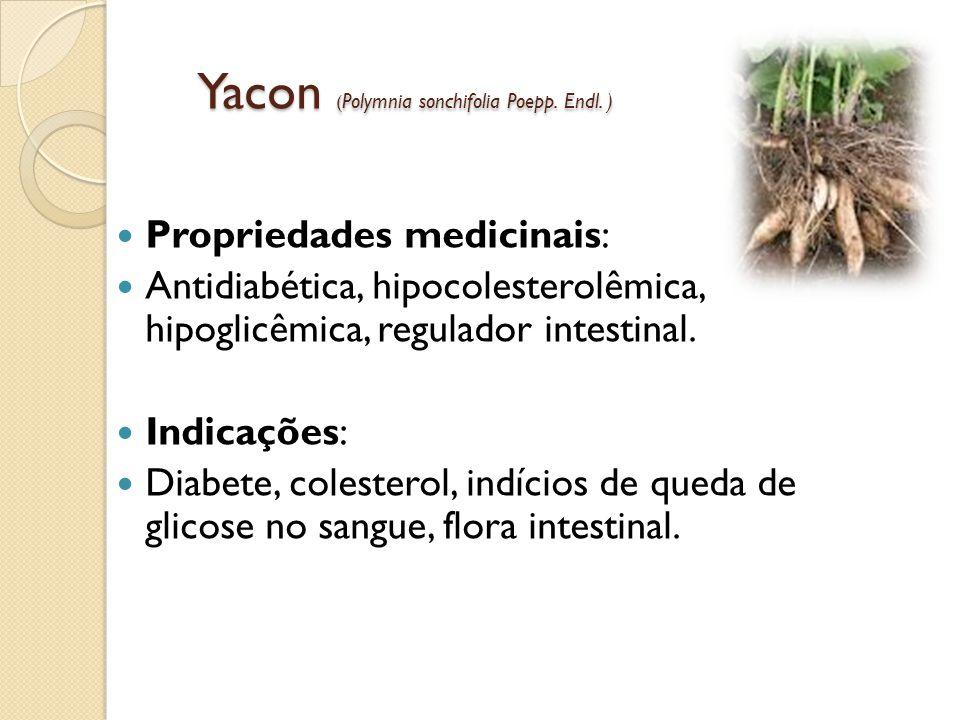 Yacon ( Polymnia sonchifolia Poepp.Endl.