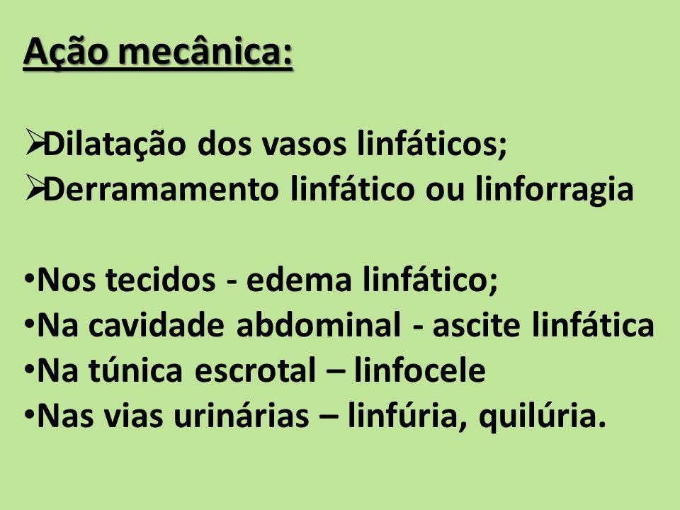 Ação mecânica: Dilatação dos vasos linfáticos; Derramamento linfático ou linforragia Nos tecidos - edema linfático; Na cavidade abdominal - ascite linfática Na túnica escrotal – linfocele Nas vias urinárias – linfúria, quilúria.