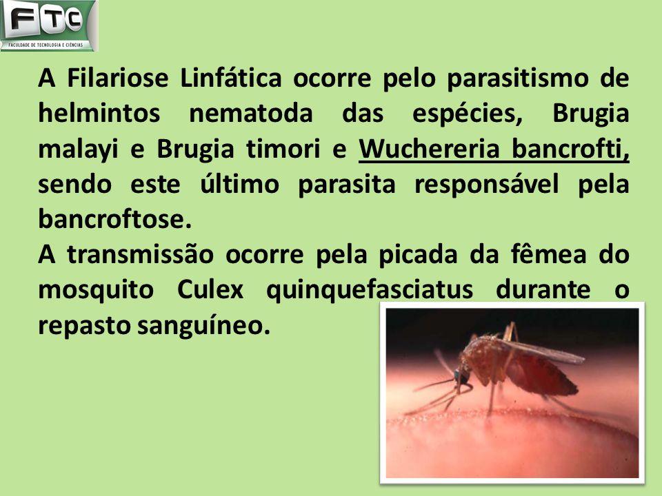 A Filariose Linfática ocorre pelo parasitismo de helmintos nematoda das espécies, Brugia malayi e Brugia timori e Wuchereria bancrofti, sendo este últ