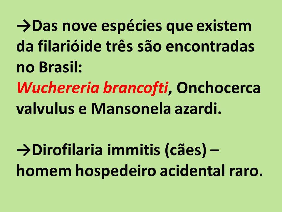 Das nove espécies que existem da filarióide três são encontradas no Brasil: Wuchereria brancofti, Onchocerca valvulus e Mansonela azardi.