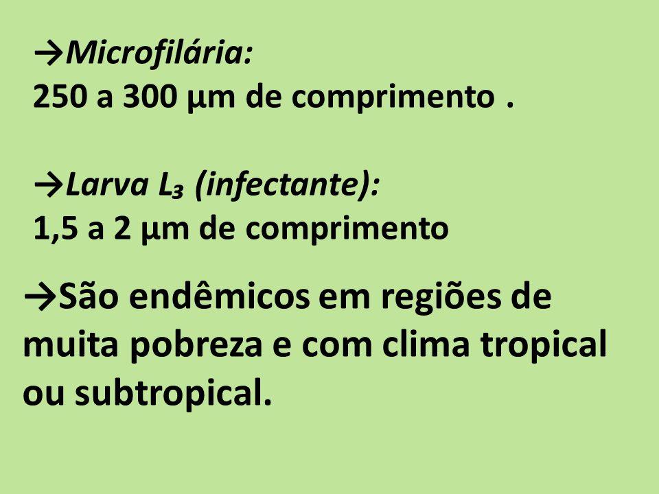 São endêmicos em regiões de muita pobreza e com clima tropical ou subtropical. Microfilária: 250 a 300 µm de comprimento. Larva L (infectante): 1,5 a