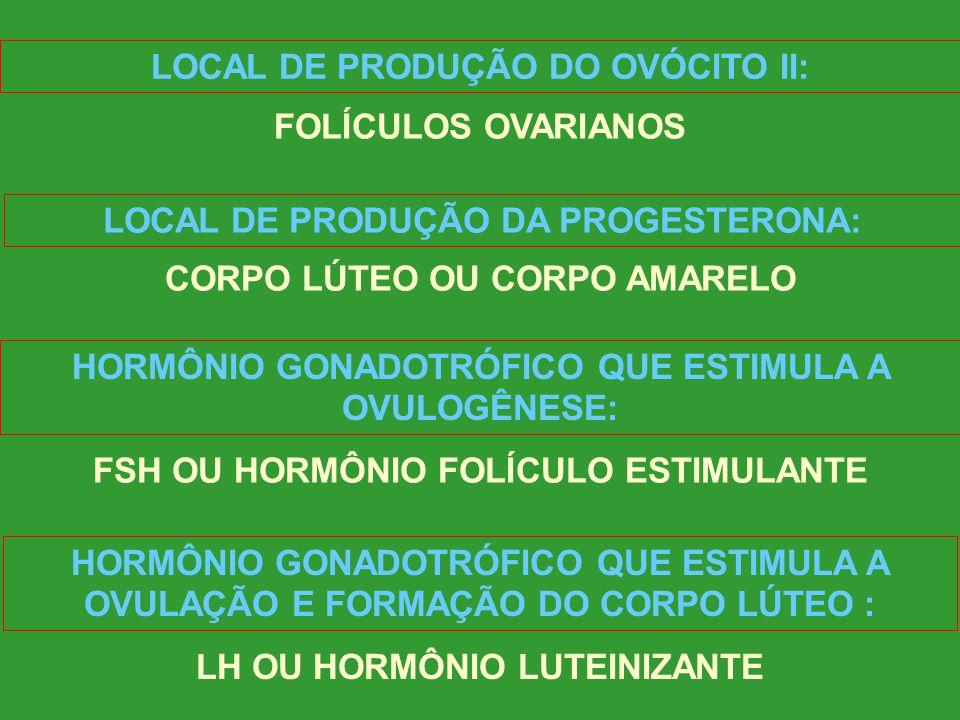 LOCAL DE PRODUÇÃO DOS ESPERMATOZÓIDES: TÚBULOS SEMINÍFEROS LOCAL DE PRODUÇÃO DA TESTOSTERONA: CÉLULAS INTERSTICIAIS DE LEYDIG HORMÔNIO GONADOTRÓFICO Q