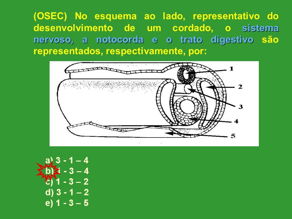 sistema nervoso, a notocorda e o trato digestivo (OSEC) No esquema ao lado, representativo do desenvolvimento de um cordado, o sistema nervoso, a notocorda e o trato digestivo são representados, respectivamente, por: a) 3 - 1 – 4 b) 1 - 3 – 4 c) 1 - 3 – 2 d) 3 - 1 – 2 e) 1 - 3 – 5