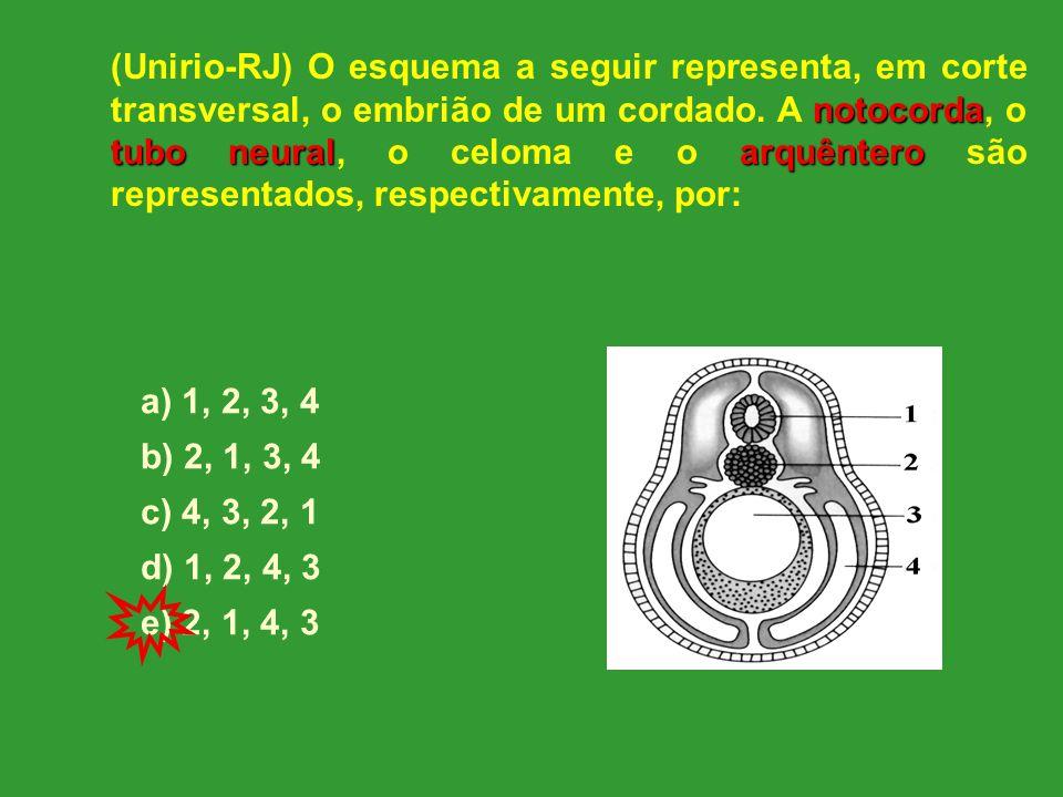 notocorda tubo neuralarquêntero (Unirio-RJ) O esquema a seguir representa, em corte transversal, o embrião de um cordado.