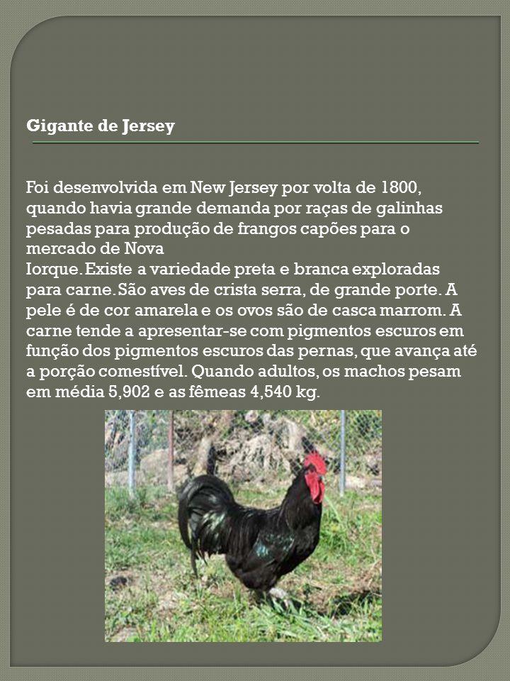 Foi desenvolvida em New Jersey por volta de 1800, quando havia grande demanda por raças de galinhas pesadas para produção de frangos capões para o mer