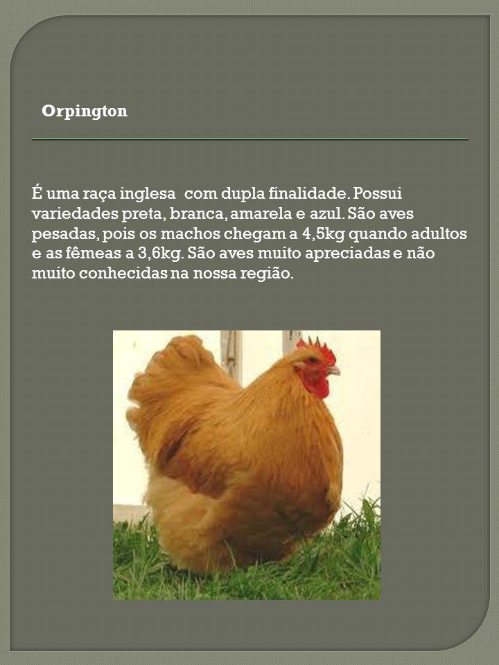 As aves desta variedade foram muito utilizadas nos primeiros cruzamentos para produção de frangos de corte.