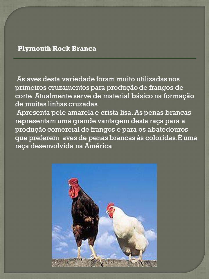 As aves desta variedade foram muito utilizadas nos primeiros cruzamentos para produção de frangos de corte. Atualmente serve de material básico na for