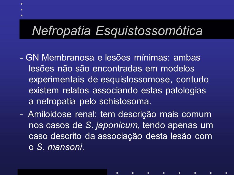 Nefropatia Esquistossomótica - GN Membranosa e lesões mínimas: ambas lesões não são encontradas em modelos experimentais de esquistossomose, contudo e