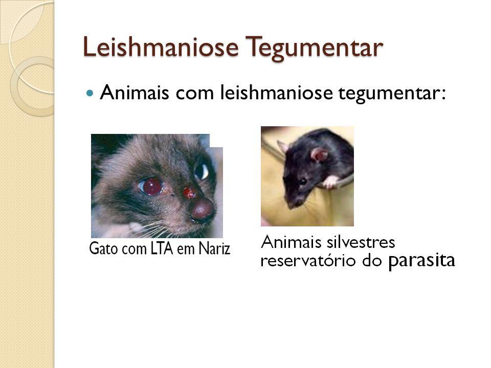Leishmaniose Tegumentar Animais com leishmaniose tegumentar: