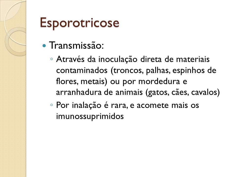 Esporotricose Transmissão: Através da inoculação direta de materiais contaminados (troncos, palhas, espinhos de flores, metais) ou por mordedura e arr