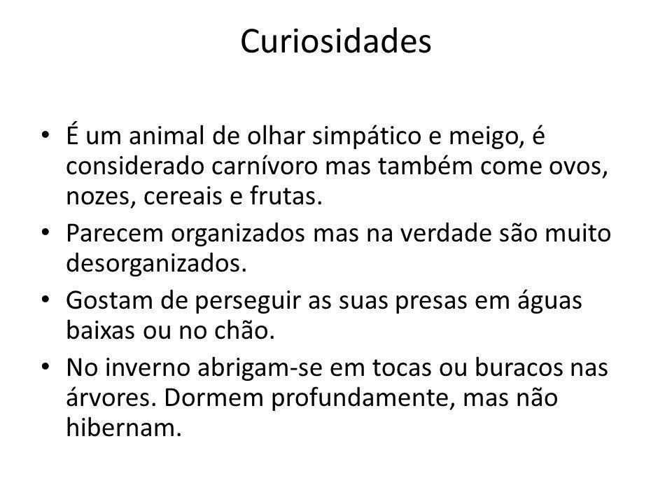 Curiosidades É um animal de olhar simpático e meigo, é considerado carnívoro mas também come ovos, nozes, cereais e frutas. Parecem organizados mas na