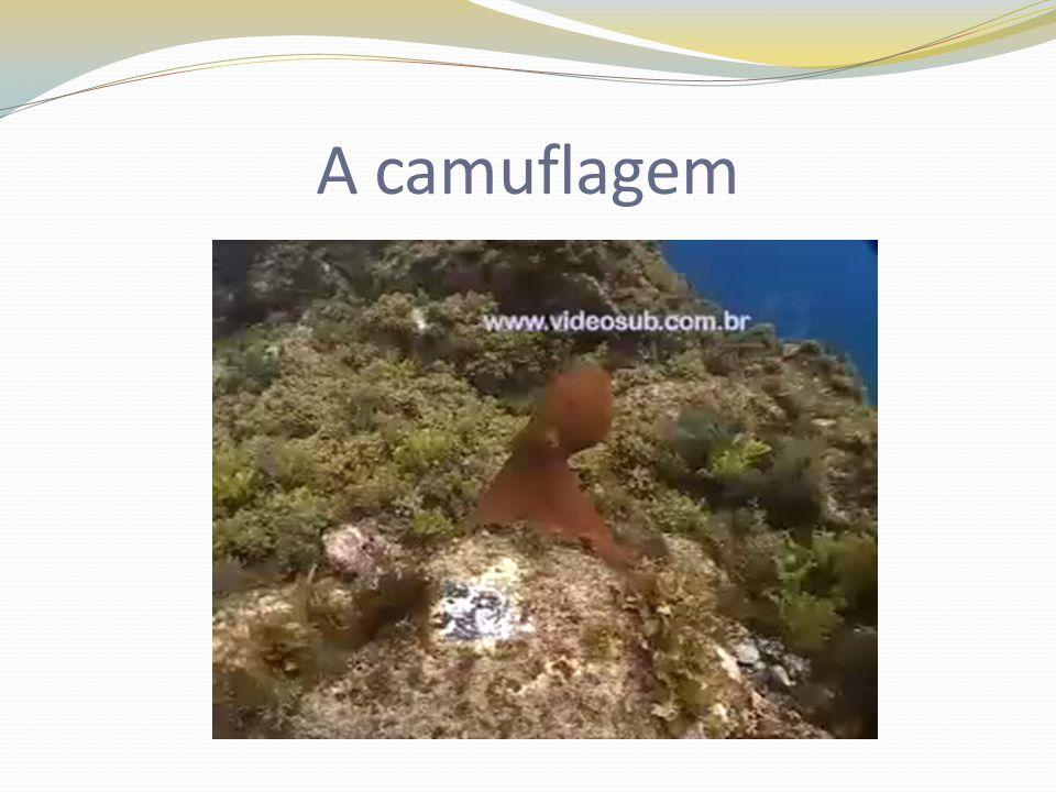 A camuflagem