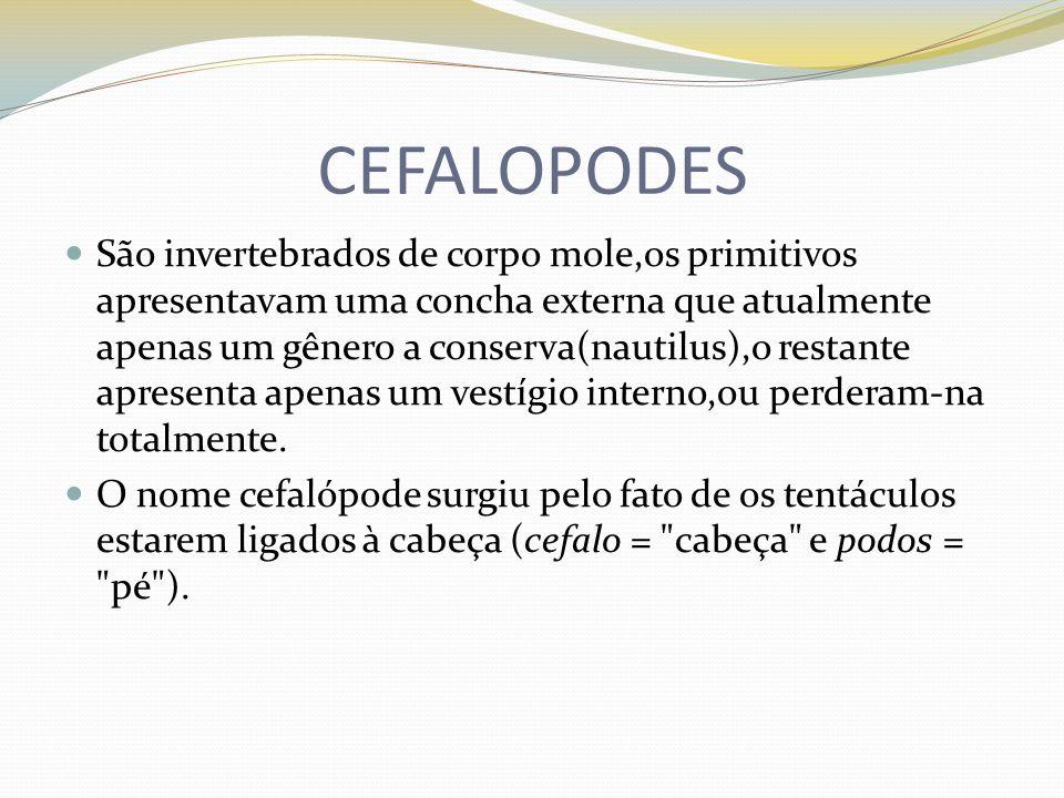 CEFALOPODES São invertebrados de corpo mole,os primitivos apresentavam uma concha externa que atualmente apenas um gênero a conserva(nautilus),o resta