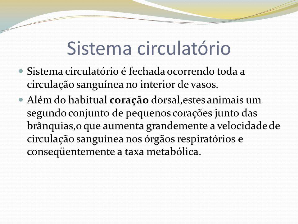 Sistema circulatório Sistema circulatório é fechada ocorrendo toda a circulação sanguínea no interior de vasos. Além do habitual coração dorsal,estes