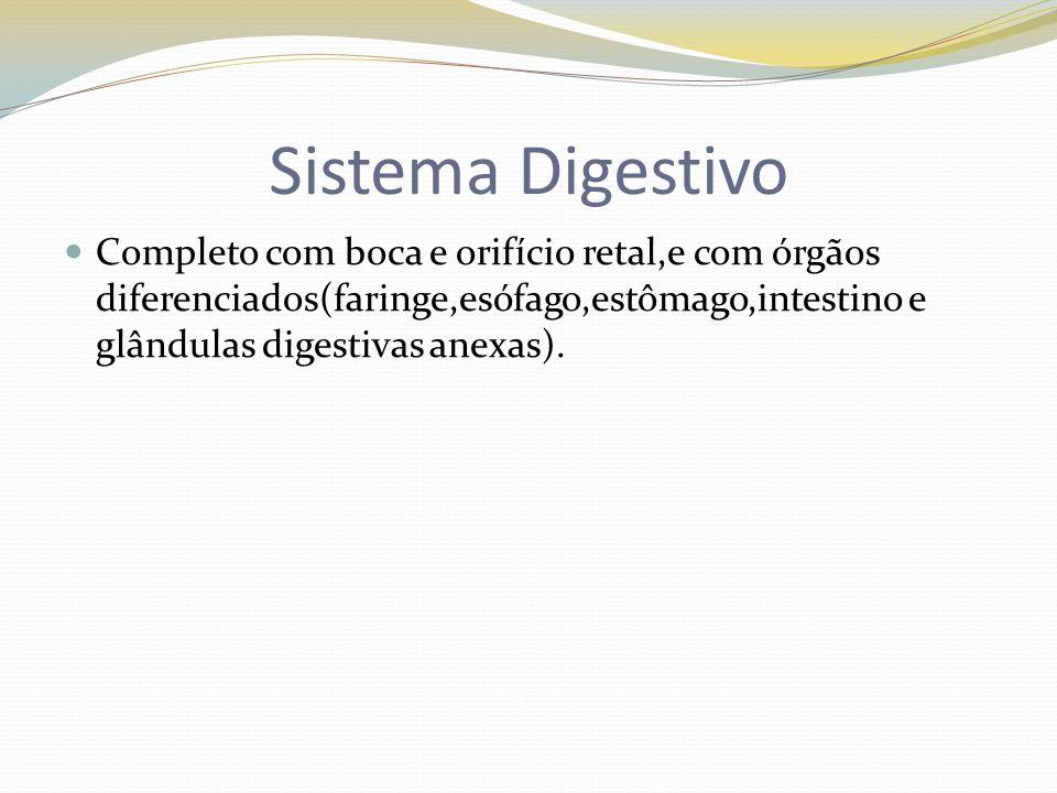 Sistema Digestivo Completo com boca e orifício retal,e com órgãos diferenciados(faringe,esófago,estômago,intestino e glândulas digestivas anexas).