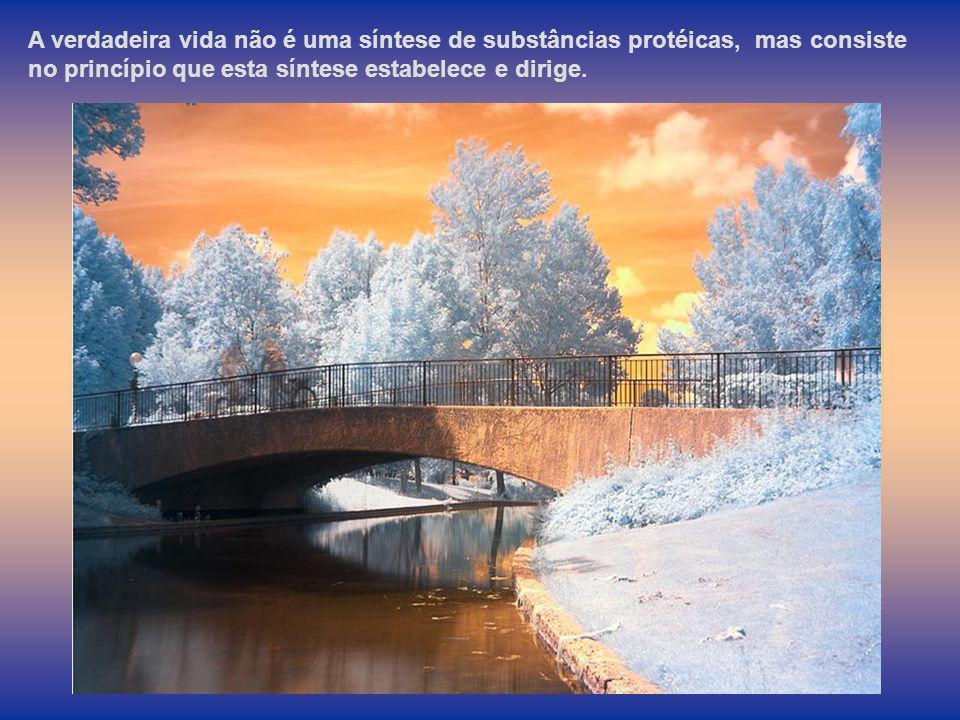 A verdadeira vida não é uma síntese de substâncias protéicas, mas consiste no princípio que esta síntese estabelece e dirige.