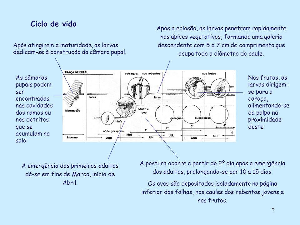 7 Ciclo de vida A emergência dos primeiros adultos dá-se em fins de Março, início de Abril. A postura ocorre a partir do 2º dia após a emergência dos