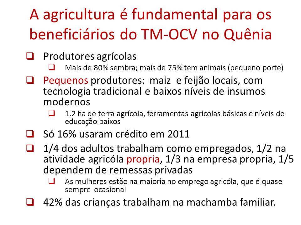 A agricultura é fundamental para os beneficiários do TM-OCV no Quênia Produtores agrícolas Mais de 80% sembra; mais de 75% tem animais (pequeno porte) Pequenos produtores: maiz e feijão locais, com tecnologia tradicional e baixos níveis de insumos modernos 1.2 ha de terra agrícola, ferramentas agricolas básicas e níveis de educação baixos Só 16% usaram crédito em 2011 1/4 dos adultos trabalham como empregados, 1/2 na atividade agricóla propria, 1/3 na empresa propria, 1/5 dependem de remessas privadas As mulheres estão na maioria no emprego agricóla, que é quase sempre ocasional 42% das crianças trabalham na machamba familiar.