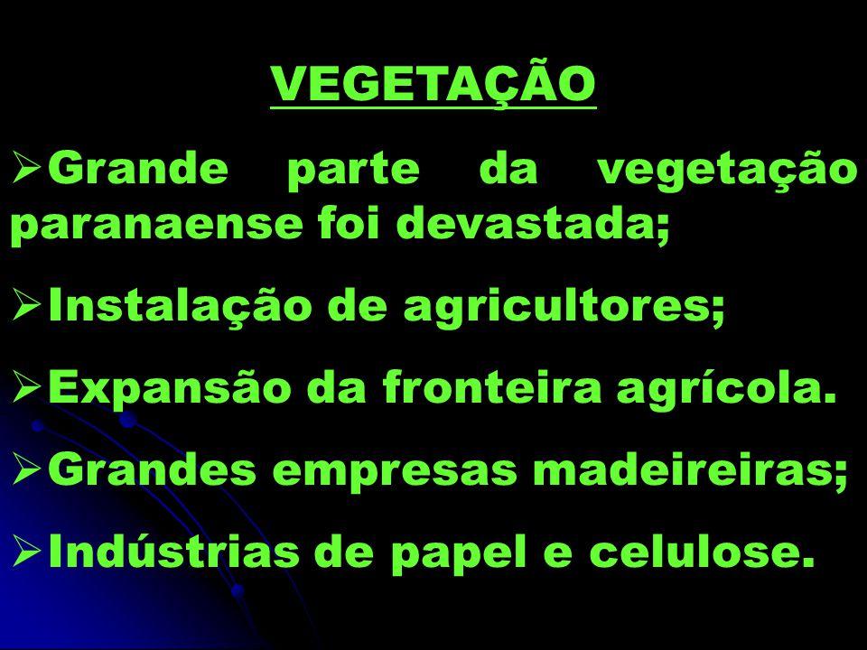VEGETAÇÃO Grande parte da vegetação paranaense foi devastada; Instalação de agricultores; Expansão da fronteira agrícola. Grandes empresas madeireiras