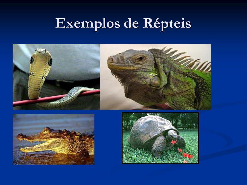 Exemplos de Répteis