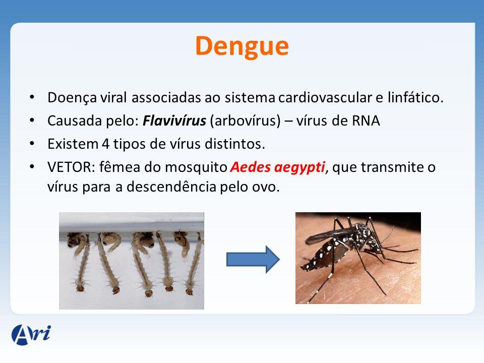 Dengue Doença viral associadas ao sistema cardiovascular e linfático. Causada pelo: Flavivírus (arbovírus) – vírus de RNA Existem 4 tipos de vírus dis