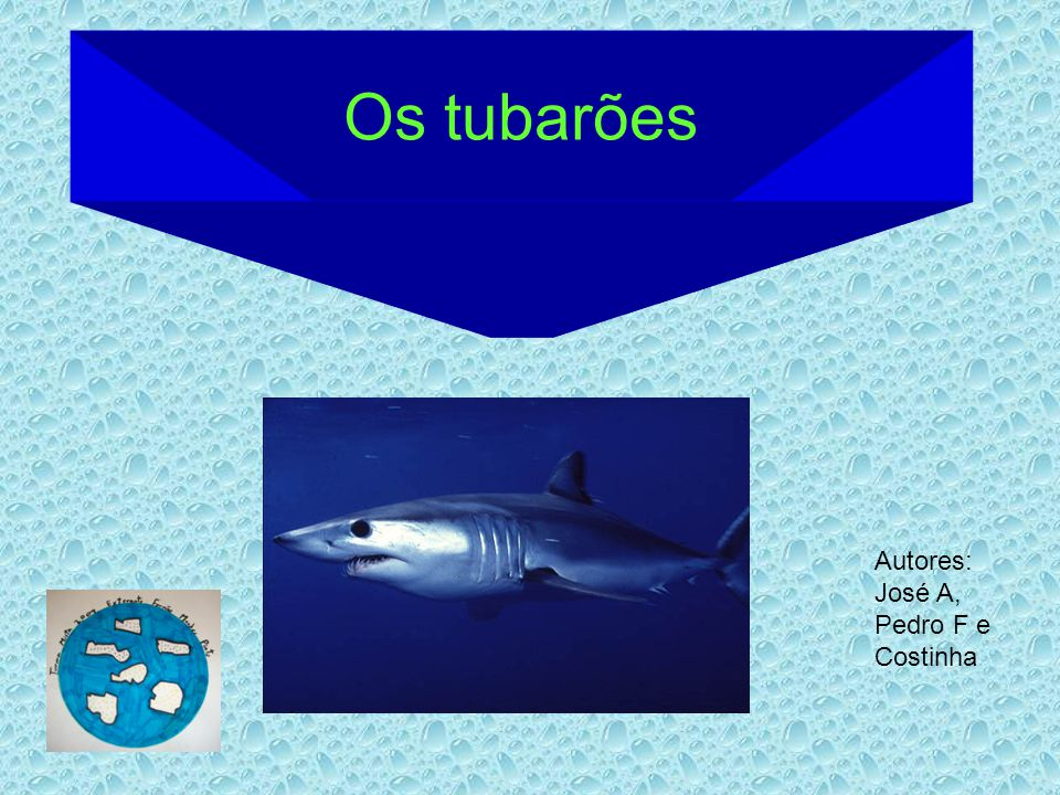 Onde vivem Os tubarões costumam viver em regiões tropicais.