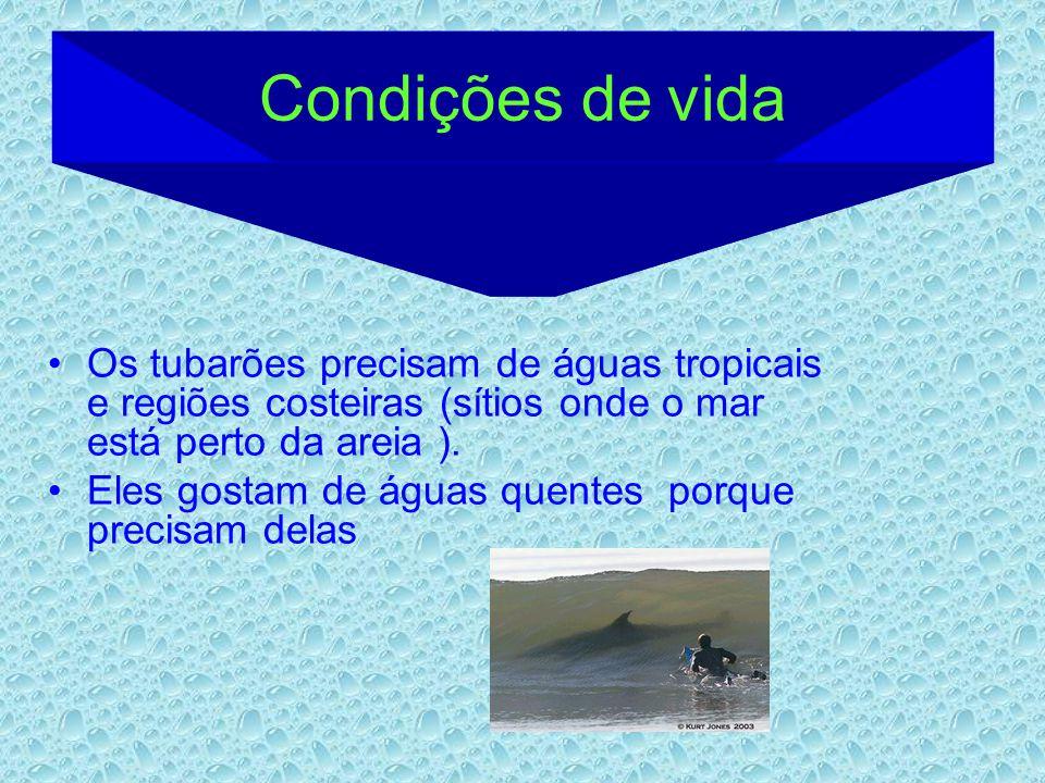 Os tubarões precisam de águas tropicais e regiões costeiras (sítios onde o mar está perto da areia ). Eles gostam de águas quentes porque precisam del