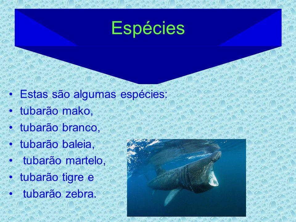 Espécies Estas são algumas espécies: tubarão mako, tubarão branco, tubarão baleia, tubarão martelo, tubarão tigre e tubarão zebra.