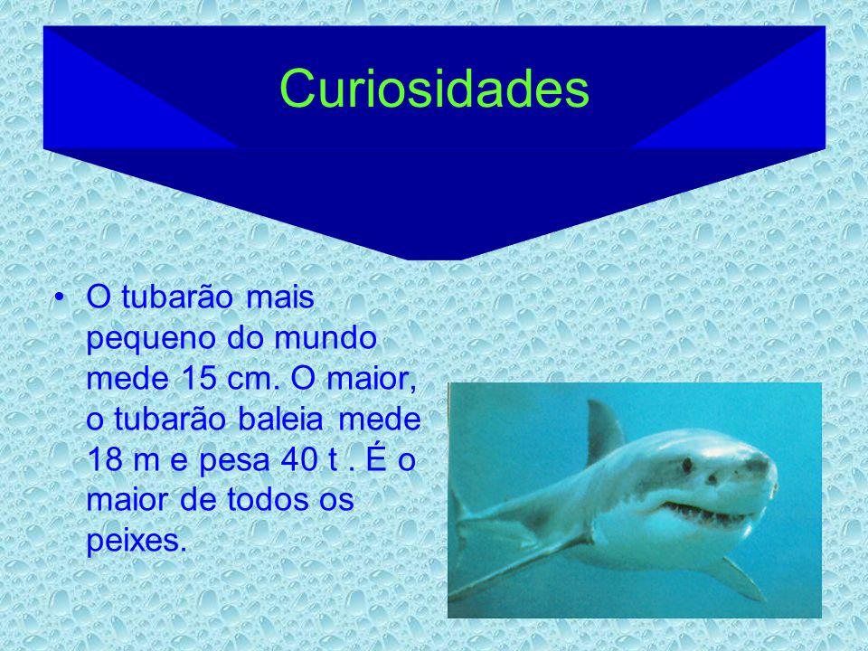 Curiosidades O tubarão mais pequeno do mundo mede 15 cm. O maior, o tubarão baleia mede 18 m e pesa 40 t. É o maior de todos os peixes.