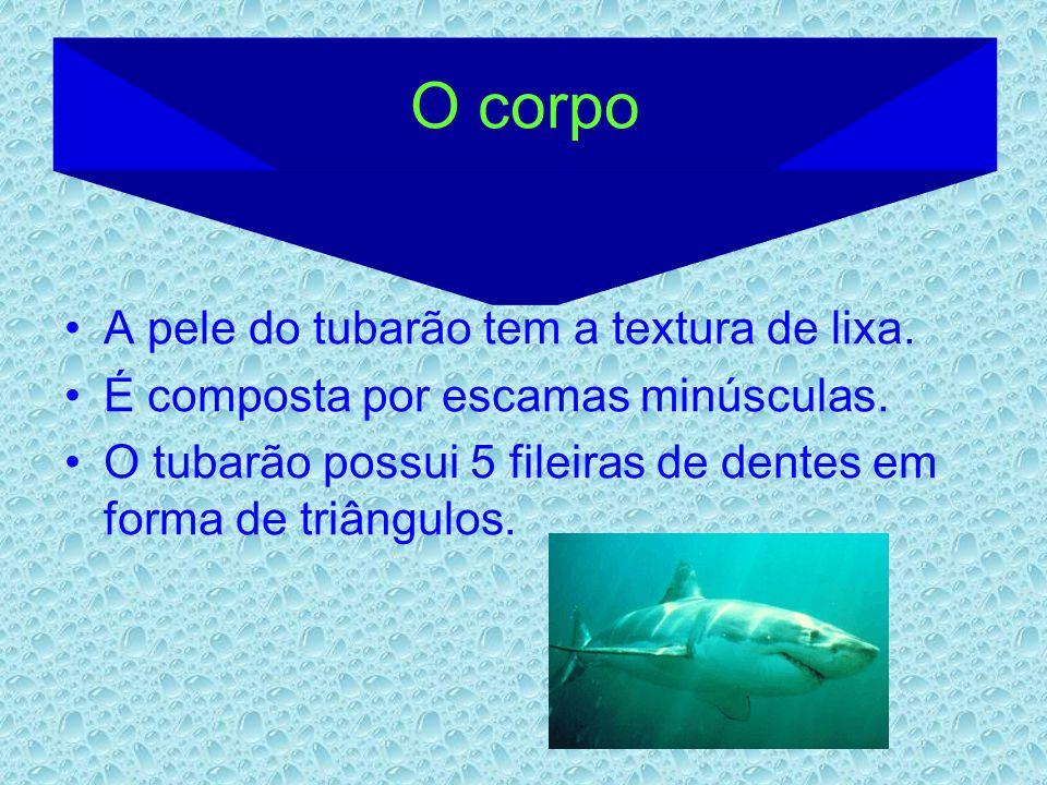 O corpo A pele do tubarão tem a textura de lixa. É composta por escamas minúsculas. O tubarão possui 5 fileiras de dentes em forma de triângulos.