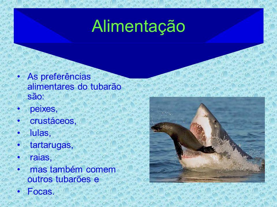 Alimentação As preferências alimentares do tubarão são: peixes, crustáceos, lulas, tartarugas, raias, mas também comem outros tubarões e Focas.