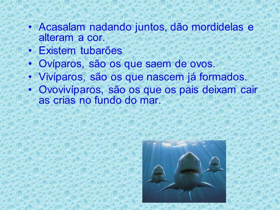 Acasalam nadando juntos, dão mordidelas e alteram a cor. Existem tubarões Ovíparos, são os que saem de ovos. Vivíparos, são os que nascem já formados.