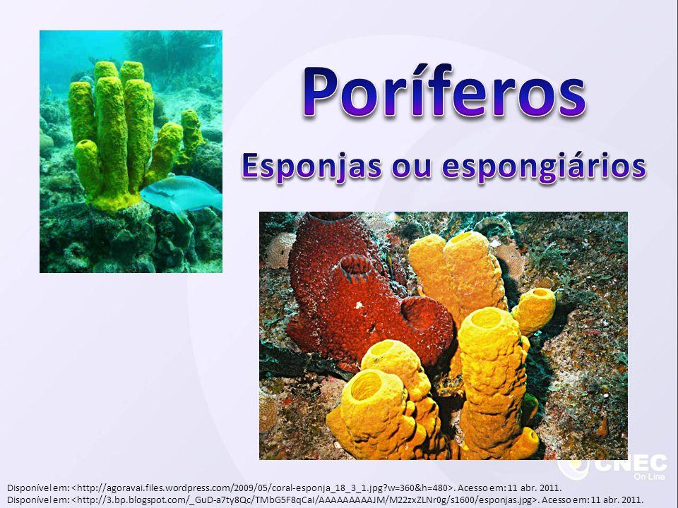 Hydrozoa (hidrozoários) Alternância de gerações ou apenas pólipo Marinhos e dulcícolas Obelia e caravela portuguesa Scyphozoa (cifozoários) Alternância de gerações (alguns não formam pólipo) Aurelia Disponível em:.