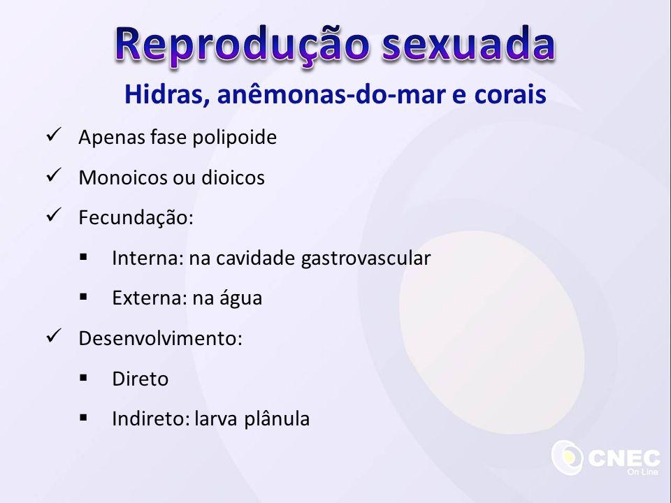 Hidras, anêmonas-do-mar e corais Apenas fase polipoide Monoicos ou dioicos Fecundação: Interna: na cavidade gastrovascular Externa: na água Desenvolvimento: Direto Indireto: larva plânula