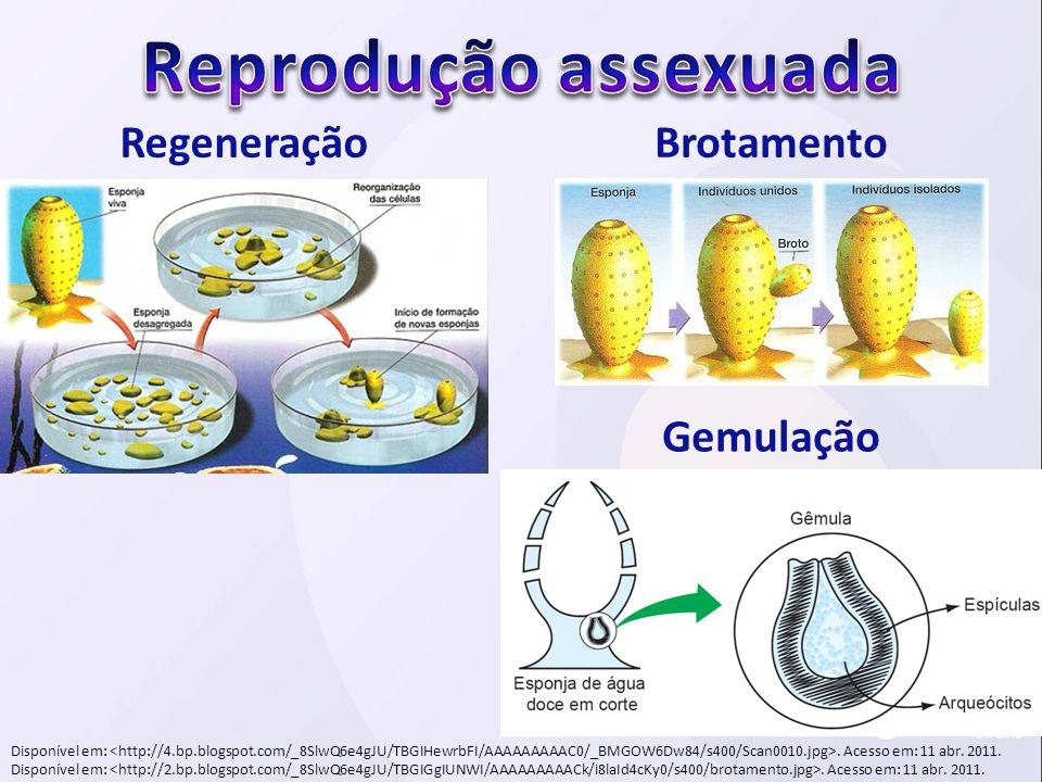 RegeneraçãoBrotamento Disponível em:. Acesso em: 11 abr. 2011. Gemulação