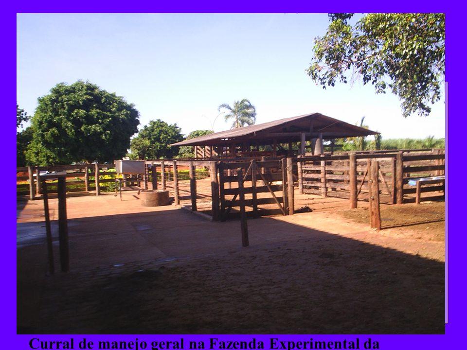 Curral de manejo geral na Fazenda Experimental da Agrovale, 2007.