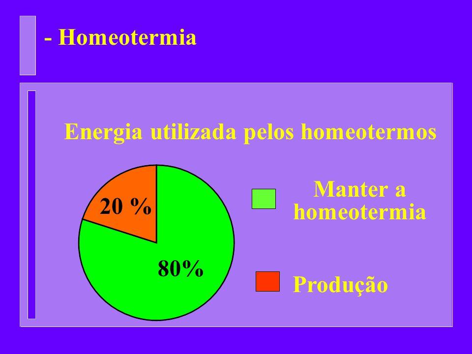 - Homeotermia 80% 20 % Energia utilizada pelos homeotermos Manter a homeotermia Produção
